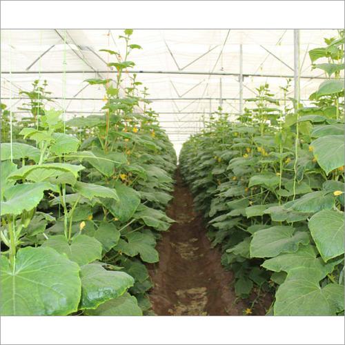 Soil Fertigation