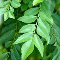 Flavoring Leaves