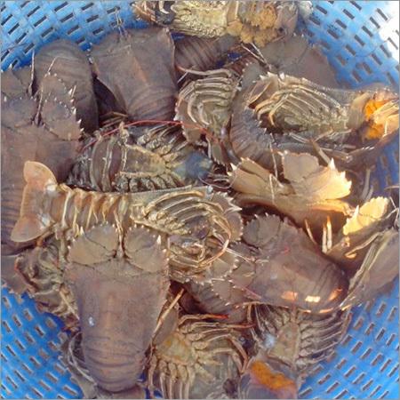 Frozen Sea Crab