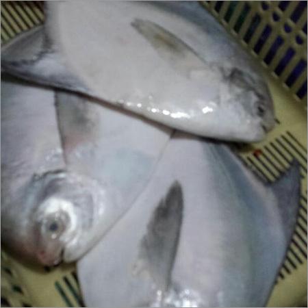 Fish Meat
