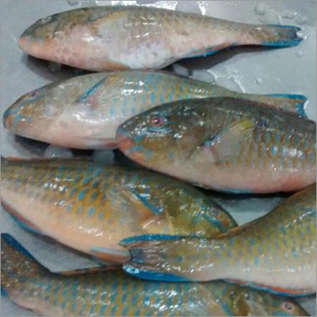 Pomfret Vaval Fish