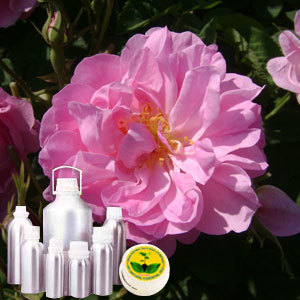 Rose CO2 Absolute Oil