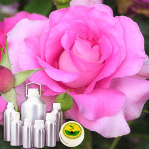 Rose Oil (Hydro Distilled) Absolute Oil