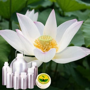 White Lotus Absolute Oil