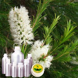 Tea Tree Oil Certified Organic