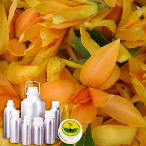 Champa(Mangolia) Water