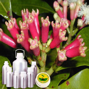 Clove Bud CO2 Extract Oil - INDIA AROMA OILS AND COMPANY, C