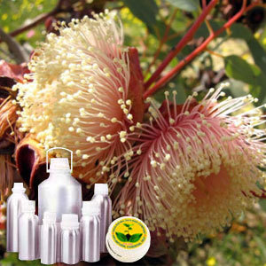 Eucalyptus CO2 Extract Oil