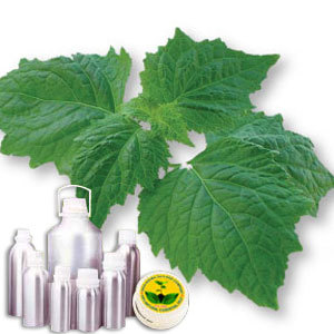 Patchouli CO2 Extract Oil