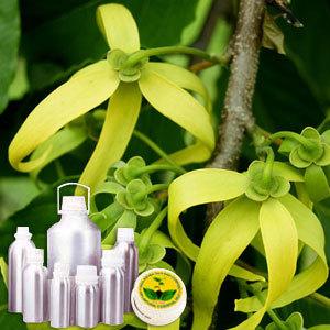 Ylang - Ylang Oil