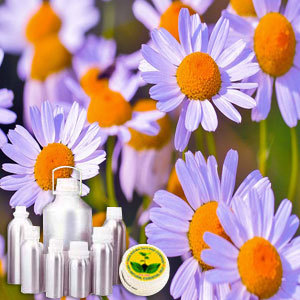 Wildcrafted Chamomile German Oil