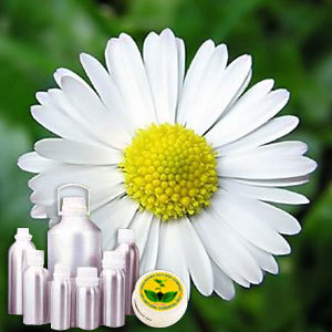 Wildcrafted Chamomile Roman Oil