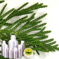 Wildcrafted Cypress Leaf Oil
