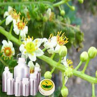 Wildcrafted Frankincense Oil