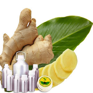 Wildcrafted Ginger Oil