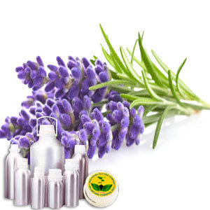 Wildcrafted Lavender Oil