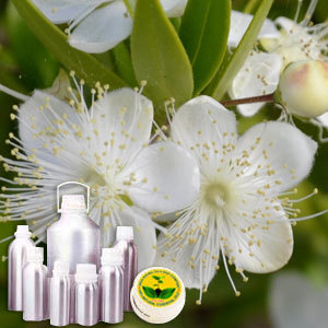 Wildcrafted Myrtle Oil