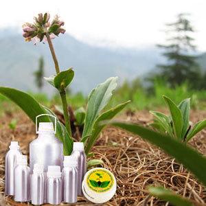 Spikenard Oil