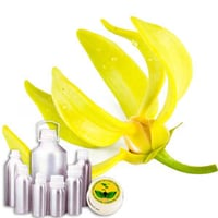 Wildcrafted Ylang Ylang Oil
