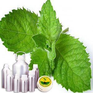 Liqued Menthol (Peppermint Oil)