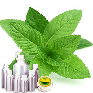 Mentha Piperata Oil (Oil Peppermint EX pipe