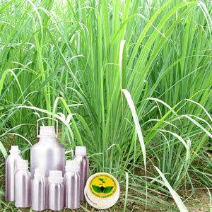 Lemongrass Therapeutic Grade Oil