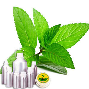 Peppermint Therapeutic Grade Oil
