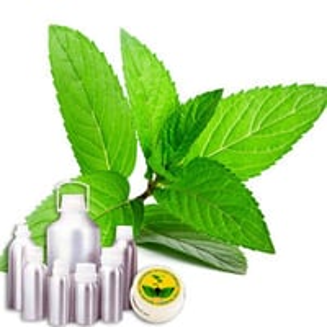 Peppermint Therapeutic Grade Oil