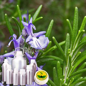 Rosemary Therapeutic Grade Oil