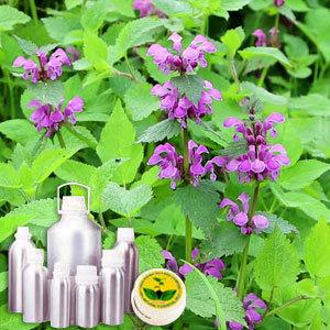 Sage Therapeutic Grade Oil