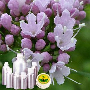 Valerian Therapeutic Grade Oil