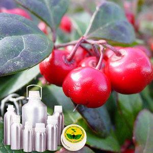 Winter Green Therapeutic Grade Oil
