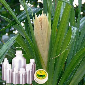Kewra Attar Attar of Kewra Flower