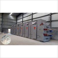 Paddy HAG Base Dyer Plant
