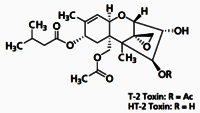 HT-2 Toxin-13C22 solution