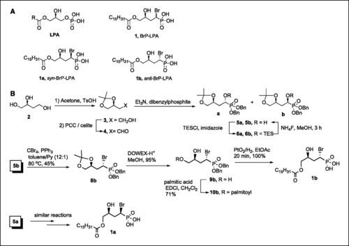 Human immunoglobulin (molecular size) BRP