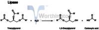 Human pancreatic Lipase (recombinant)