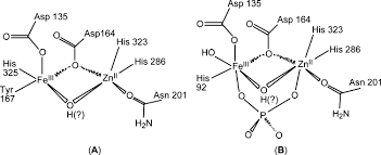 Human prostatic acid phosphatase (catalytic concentration)