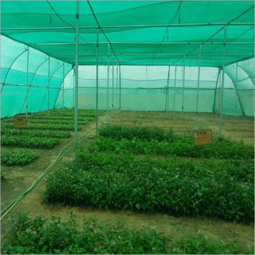 Medicinal Hybrid Plant
