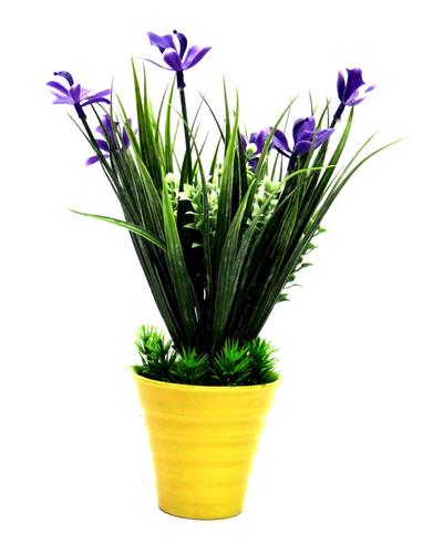 Bonsai Wild Plant
