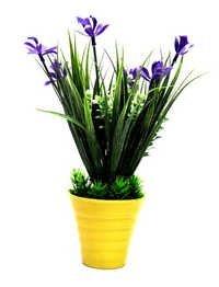 Bonsai Wild Plant Without Vase (23*23*14)