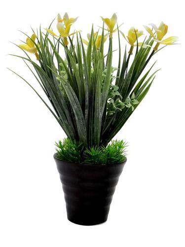 Bonsai Wild Plant Without Vase RS 95.00