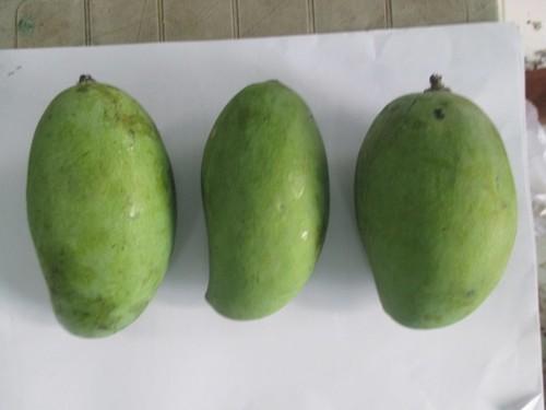 Kachha Mango