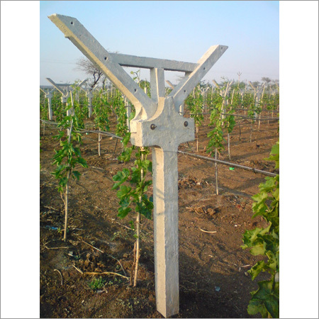 Cement Poles For Grapes Farm