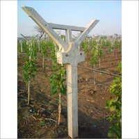 Cement Poles For Grapes Farm