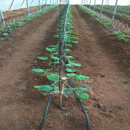 Vegetable Plant Support Net