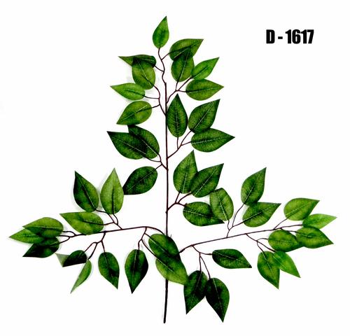 Ficus Spray 1617