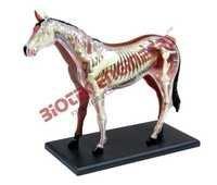 Horse Model