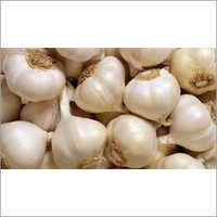 White Garlic Granules