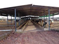 Dairy Farm Shed
